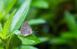 Butterfly sitting on a leaf in the garden. Butterfly sitting on a leaf in the garden nature background stock image