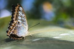 Butterfly Sitting on Leaf Isolated royalty free stock photos