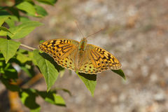 Butterfly. Sitting on a leaf in the Sunny summer garden Stock Photo