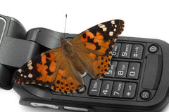 Butterfly sitting on a mobile phone Stock Photo