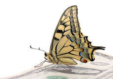 Butterfly sitting on one dollar. Banknote Royalty Free Stock Photography