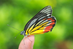 Butterfly sitting over fingertip Stock Photography