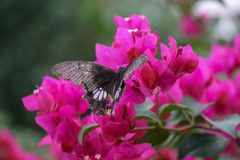 Butterfly sitting on a pink flower royalty free stock image