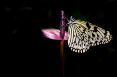 Butterfly. A butterfly sitting on a plant Royalty Free Stock Photo