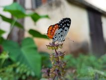 Butterfly sitting on a plant in a garden stock image