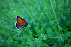 Butterfly sitting on a plant and opening wings. Close up stock photos