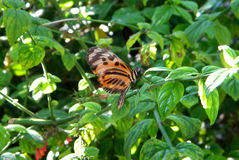 Butterfly sitting on a plant Royalty Free Stock Photo