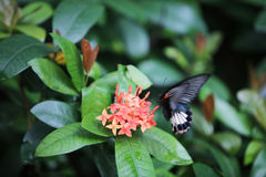 Butterfly sitting on the red flowers macro shot Royalty Free Stock Photos