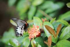 Butterfly sitting on the red flowers macro shot Royalty Free Stock Images