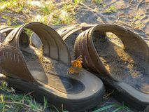 Butterfly sitting on shoe beach.Colorful butterfly sitting on the sandy beach of the sea. Coast shoe with butterfly on it in spring. Beach insect.Artistic Photo royalty free stock images