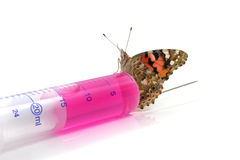 Butterfly is sitting on a syringe Stock Image