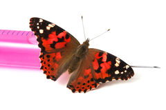 Butterfly is sitting on a syringe Royalty Free Stock Images