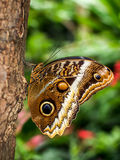 Butterfly. A butterfly sitting on a tree Stock Image