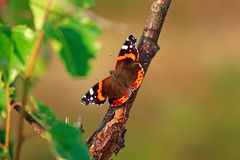 Butterfly sitting on a tree branch. In the forest on a bright sunny day royalty free stock photo