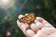 Butterfly sitting in a woman's palm Stock Photos