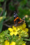 Butterfly 33 Royalty Free Stock Images
