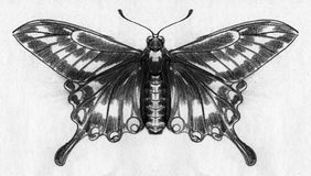 Butterfly sketch Royalty Free Stock Images