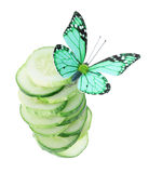 Butterfly on sliced cucumber isolated on white Stock Photos