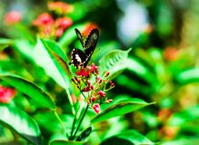 BUTTERFLY ON SMALL RED FLOWERS IN A FOREST stock photos