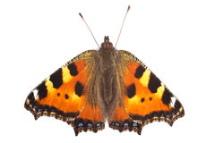 Butterfly small tortoiseshell Royalty Free Stock Photo