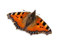 Butterfly (Small tortoiseshell). Royalty Free Stock Photos