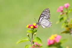 Butterfly smell flower Stock Images