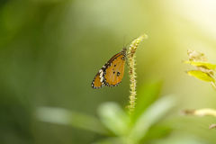 Butterfly and soft sunshine. Royalty Free Stock Images