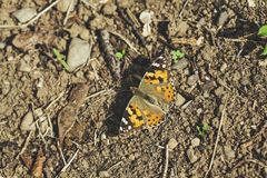 Butterfly on soil. Beautiful and color Butterfly on the soil royalty free stock images