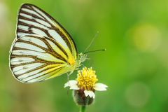 Butterfly. Species distribution in cold and arid terrain stock photography