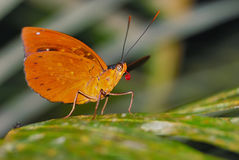 Butterfly species unidentified. It`s tongue lickin` good! Stock Photo