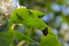 Butterfly and spider. Royalty Free Stock Photo