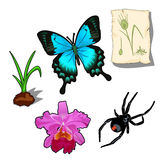 Butterfly, spider and plants in cartoon style stock illustration