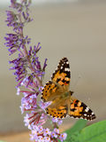 Butterfly spreading his wings. In the sun royalty free stock photography
