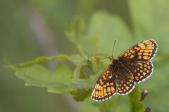 A butterfly, a spring background Royalty Free Stock Images