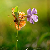 Butterfly on a spring flower at morning Stock Photography