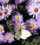 Butterfly on spring flower nature background Royalty Free Stock Photo