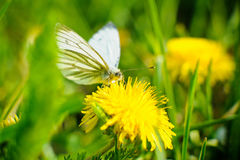 Butterfly on Spring flowers Stock Photo