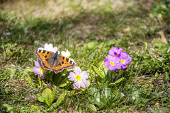 Butterfly in a spring garden stock photography