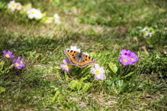 Butterfly in a spring garden stock photo
