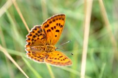 Butterfly on a spring meadow. Royalty Free Stock Photos