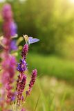 Butterfly. In a spring meadow Stock Photography