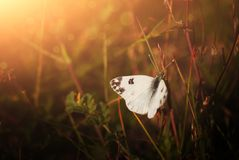 Butterfly. On a spring meadow Stock Image