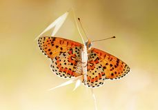 The beatiful butterfly in nature. Butterfly on a spring meadow in nature stock photography