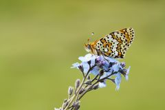 The beatiful butterfly in nature. Butterfly on a spring meadow in nature stock photo