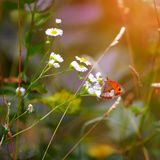 Butterfly on a spring meadow in the sunshine. Royalty Free Stock Photography