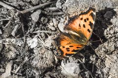 Butterfly spring photo royalty free stock photography