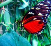Butterfly. Spring is the Super Season Royalty Free Stock Images