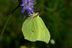 Butterfly spring time yellow. Sunny day Royalty Free Stock Image