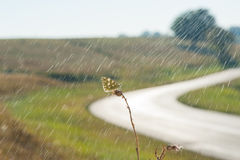 Butterfly standing on dry grass Royalty Free Stock Image