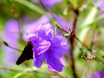 Butterfly standing on flower, Florida Stock Images